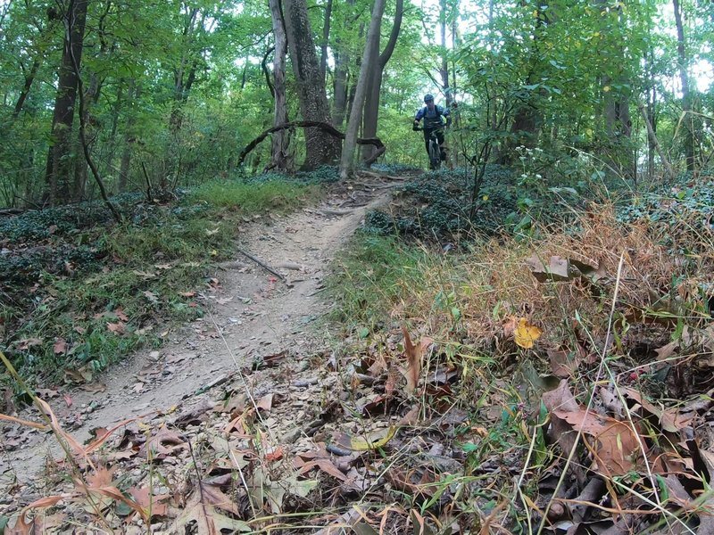 "Small root section downhill  segment near the end of the trail ""1A""."