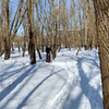 Rider enjoying some winter fun on the groomed #sacfoxsingletrack