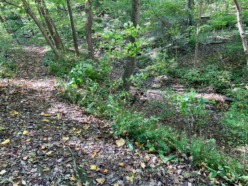 This is a very fast section of the trail just before the center of the trail where it meets up with the Neal Thorpe trail. Careful here because it's after a long and steep decline and the trail is close to a drop-off against the edge of the creek.