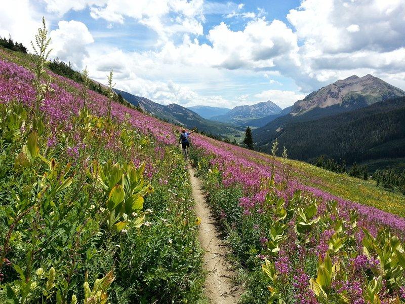 Handlebar high wildflowers