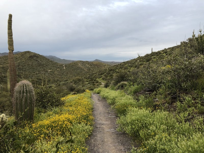Flat Rock Trail looking N.E.