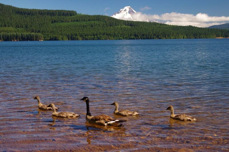 The locals enjoy their afternoon near Pine Point Campground and the Southshore Trail. Photo by Gene Blick.