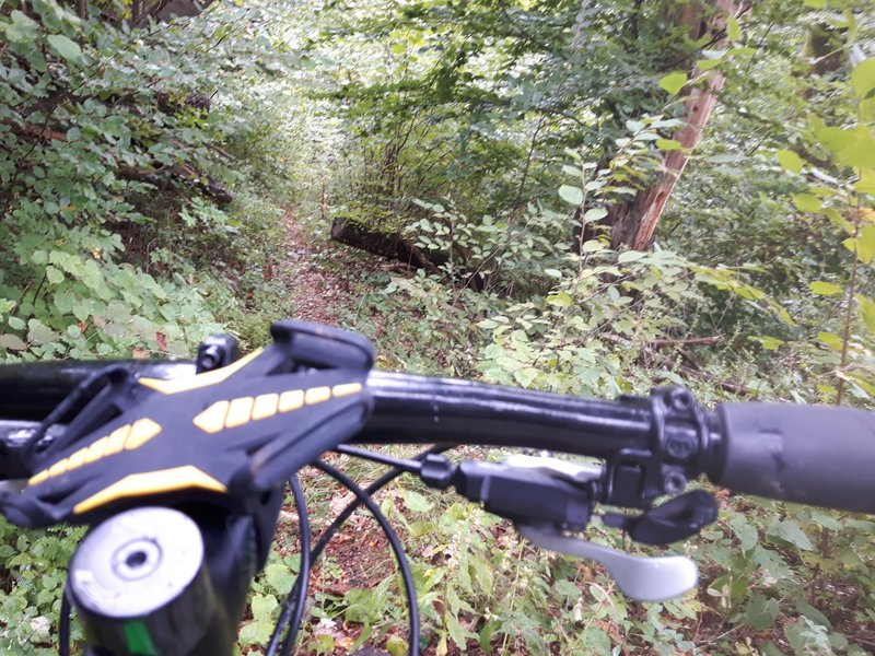 """A good rideable section of """" Kovacic planina, Middle Singletrack"""""""