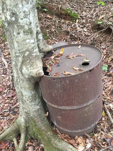 Drum that's been there a while on Fants Grove trail.