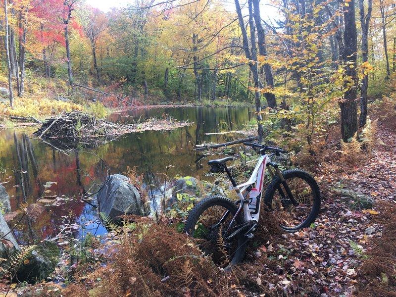 A beaver pond along the trail.