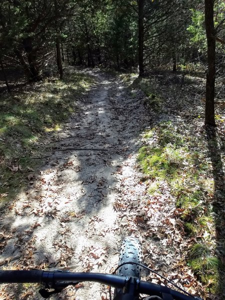 A few roots, but great trail