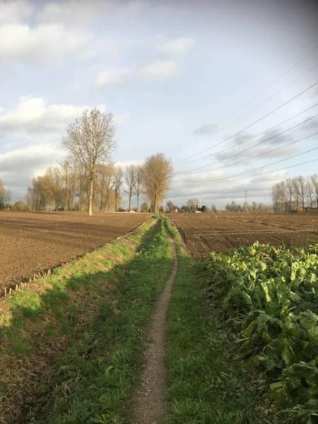 long singletrack of 4 km