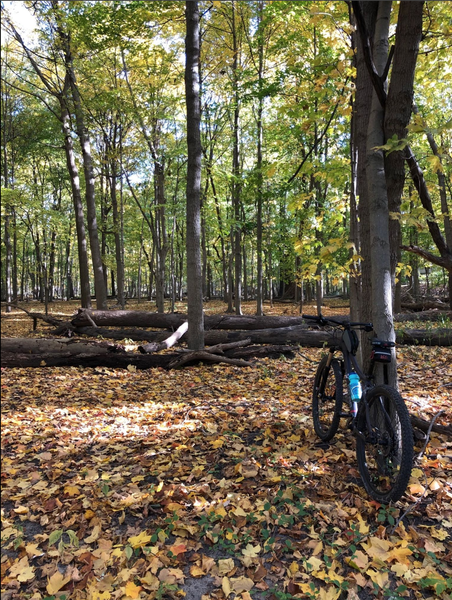 Fall day on the Riverside Trail