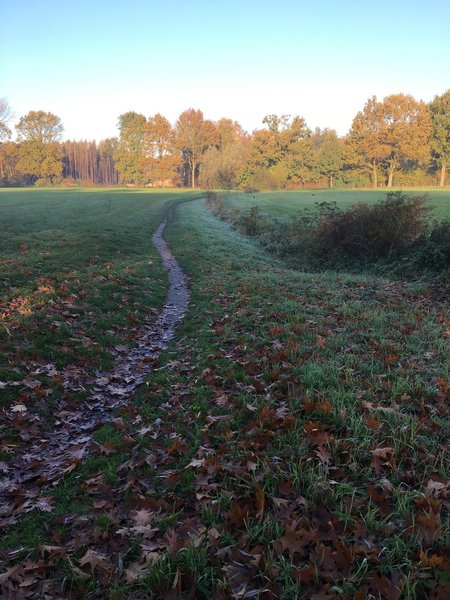 STrack to Puivelde wood