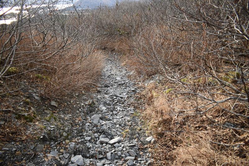 Pillar to Swampy trail