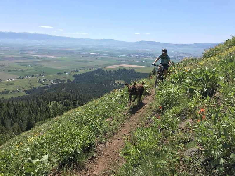 Drafting the Dog while descending Caffeine Trail