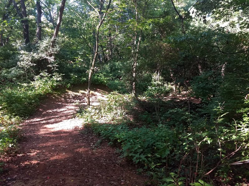 More berms and wide open trail