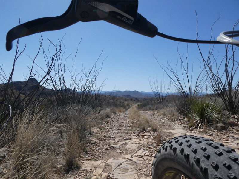 Near the intersection of Aso Loop and Rancherias Trail