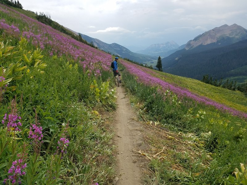 401 Wildflowers