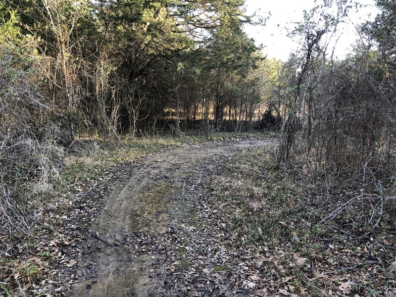 Muddy Section