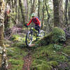 Tight turns, roots and mossy forest floor
