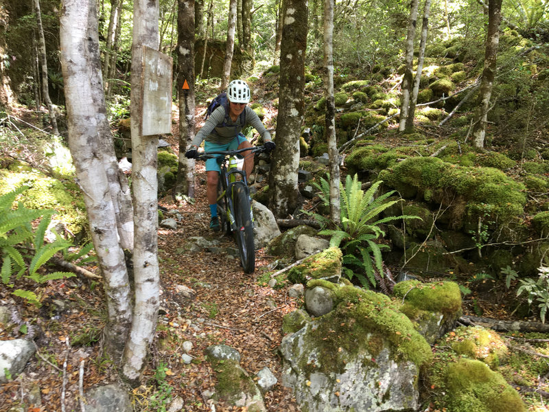 Tight riding between rocks and trees