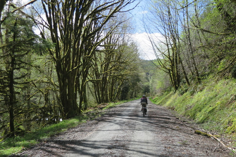 Siletz River Road