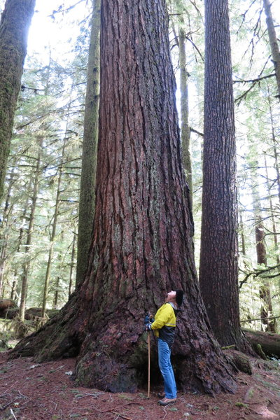 Valley of the Giants old growth forest