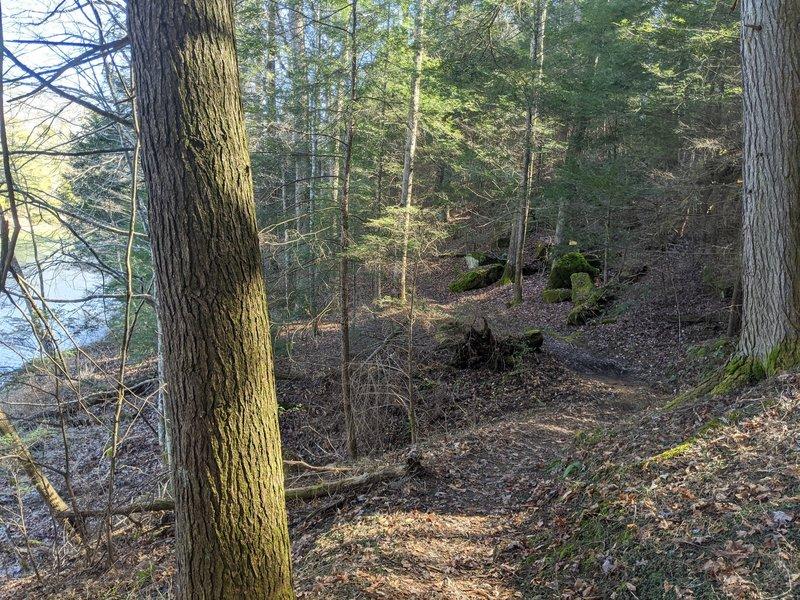 Laurel River Lake Trail Views