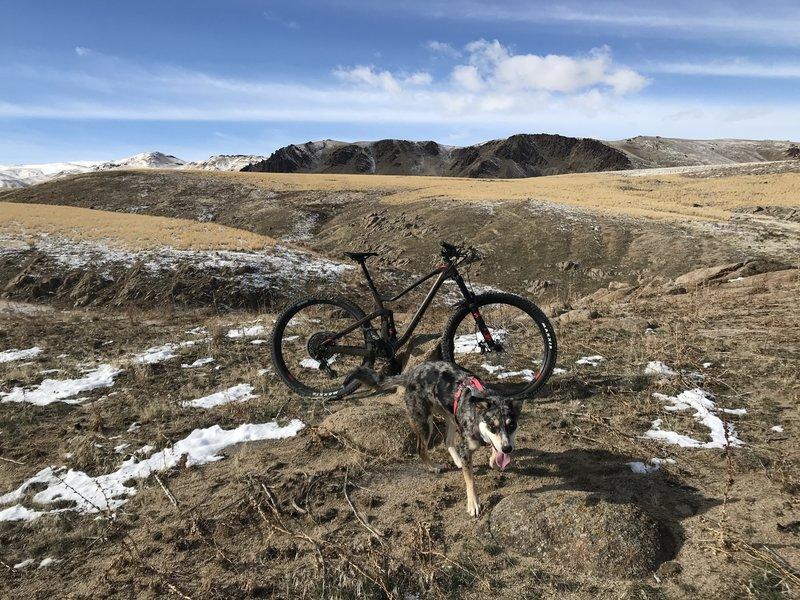 Bingo (500) trail