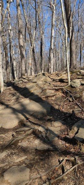 Rooty rockgarden climb