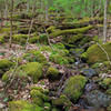 Small creek along Pole Cat Trail