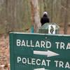 Ballard/Polecat intersection