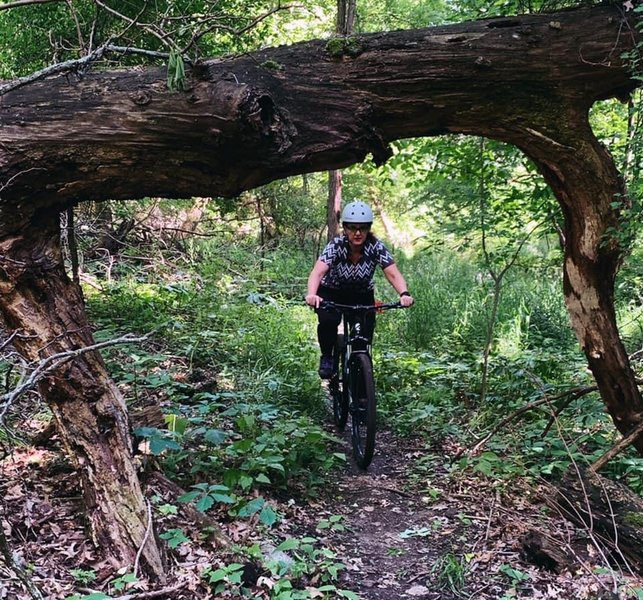 A downed tree makes for a cool photo op as riders pass under.