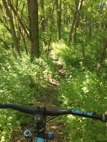 Singletrack trail.