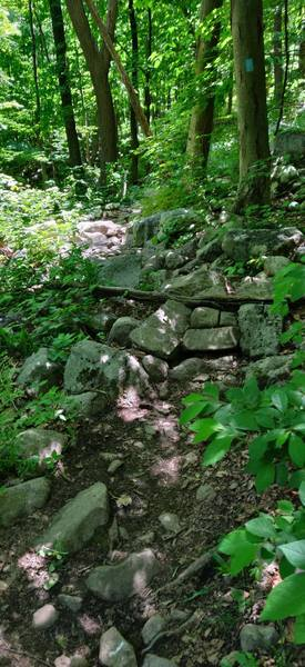 Typical rock features on Beach Glen trail