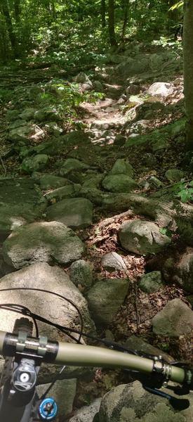 Rock garden on Beach Glen Trail