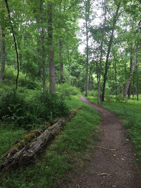 Along the Seneca Trail.