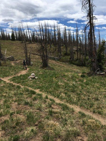Treasure Trail/CDT Junction