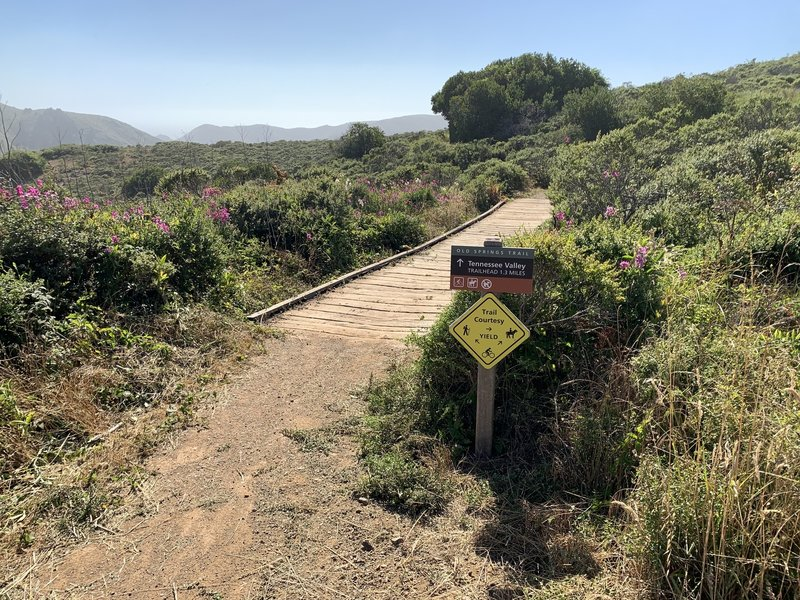 The start of the Old Springs Trail—fun trail with gorgeous views of the Tennessee Valley.