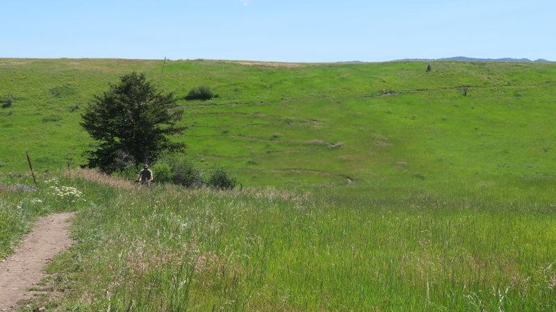 Switchbacks on hill