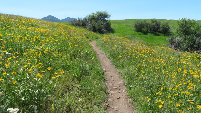 Plenty of wildflowers along the trail.