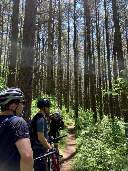 Admiring all of the towering trees @ mile 17.