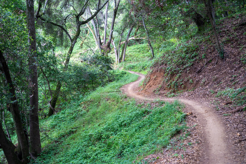 Singletrack through the forest