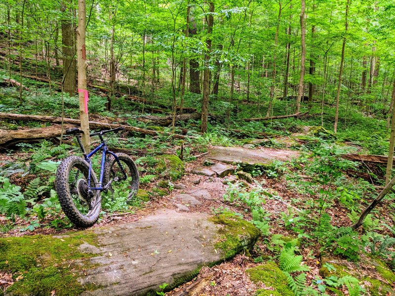 A nice set of boulders, one of the most fun downhill trails, not as technical.