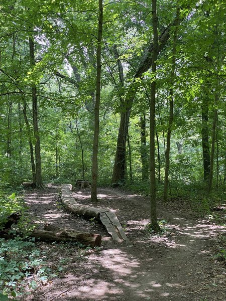 Are you even riding a trail in the Midwest without a log ride?