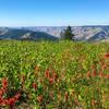 A seasonally late bloom of flowers ups the views along the Umatilla Rim Trail.