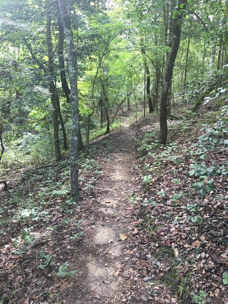 Pleasant surprise, great flowy trail with beautiful scenery...just don't be the first on the trail. Lots of spider webs.