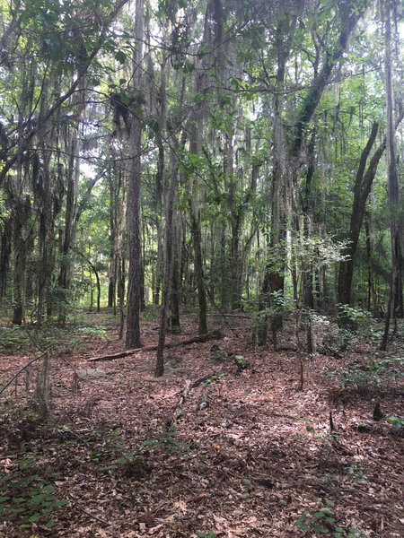 """""""Pleasant surprise, great flowy trail with beautiful scenery...just don't be the first on the trail. Lots of spider webs."""""""