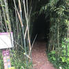 Bamboo tunnel was one of the many great variations to this trail. Had it all.