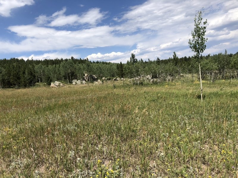 Open field along the trail