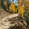 Expect aspens for the first several miles of this road. It's what you came for.