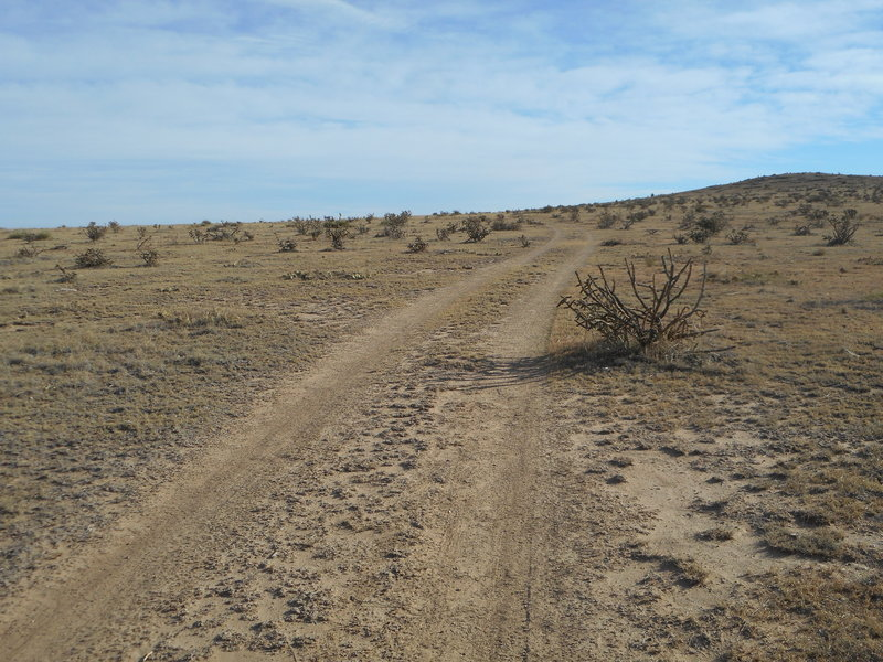 Typical dual track in Carrizo Canyon.