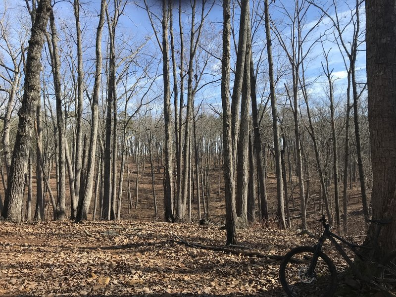 Scenic forest trail through fairly open woods.