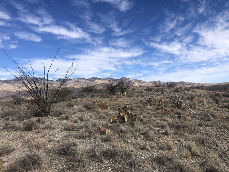 Views at Mckenzie Ranch